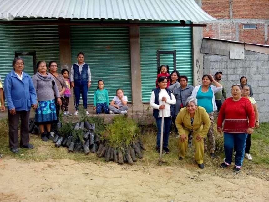 """Colonos de la """"13 de Abril"""" en  Morelia reforestan su área verde"""
