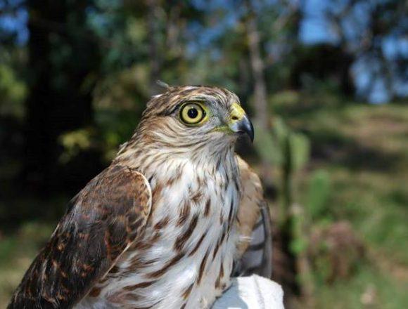 Cerro del Punhuato resguarda  más de 490 especies animales