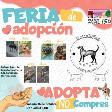 Visita la Feria de Adopción Canina y Felina este sábado