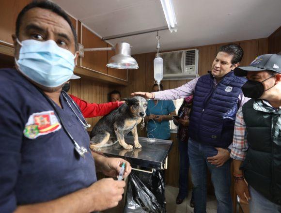 Llevan programa de esterilización canina a Capula: Ayuntamiento de Morelia